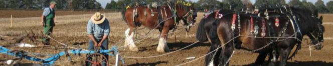 action from the World Ploughing Championships held in Lincoln in October 2010