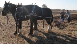 horse plough - the way it used to be