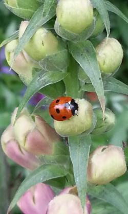 ladybird near to a spider