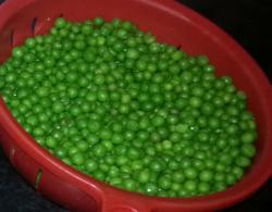 peas peas glorious peas - click to see more peas :)