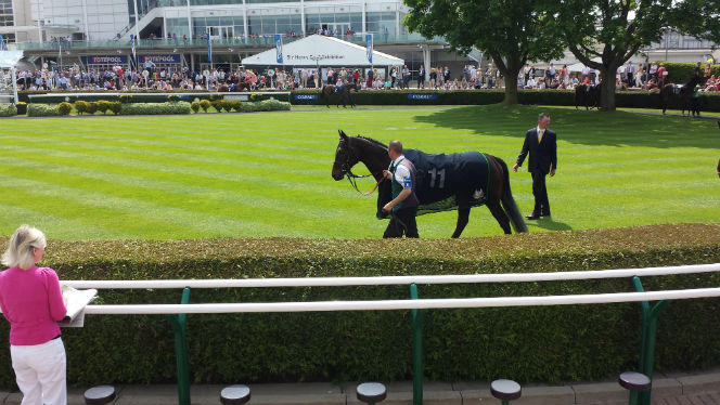 horse in newmarket parade ring