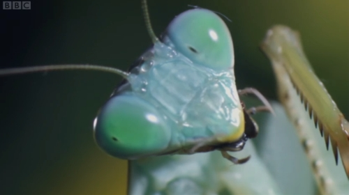 insect screenprint off BBC iPlayer over FTTC