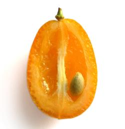 latest brand revolution - the Kumquat - has fewer pips than an Apple
