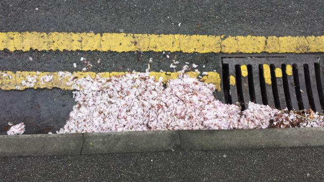 petals in the road